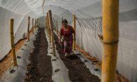 ACOMPAÑA CRÓNICA: CORONAVIRUS GUATEMALA. GU6002. SAN PEDRO YEPOCAPA (GUATEMALA), 18/07/2020.- Irma Chonay revisa la plantación de una huerta comunitaria, el 15 de julio de 2020, en una huerta comunitaria de San Pedro Yepocapa (Guatemala). Un grupo de poblados establecidos en la zona oeste de las faldas del volcán de Fuego de Guatemala se ampara en la agricultura comunitaria, con tecnología de riego y con protección de las cenizas, para sobreponerse a los estragos económicos y sociales de la COVID-19. EFE/ Esteban Biba