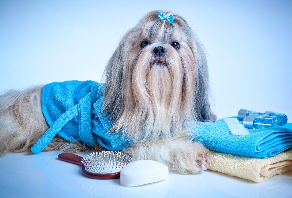 Consejos para hacer grooming a perros en casa