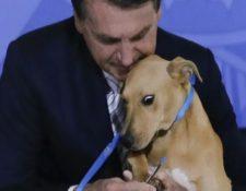 El presidente de Brasil, Jair Bolsonaro, mientras sostiene a un perro firma la ley que agrava las penas para el maltrato animal. (Foto Prensa Libre: Tomada de La Nación)