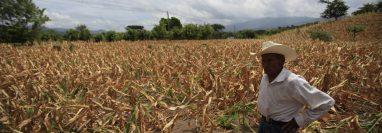 Tanto la mala distribución de los desechos como su acumulación contribuyen al cambio climático, pues contribuyen a la emisión de gases de efecto invernadero. (Foto Prensa Libre: Hemeroteca PL).