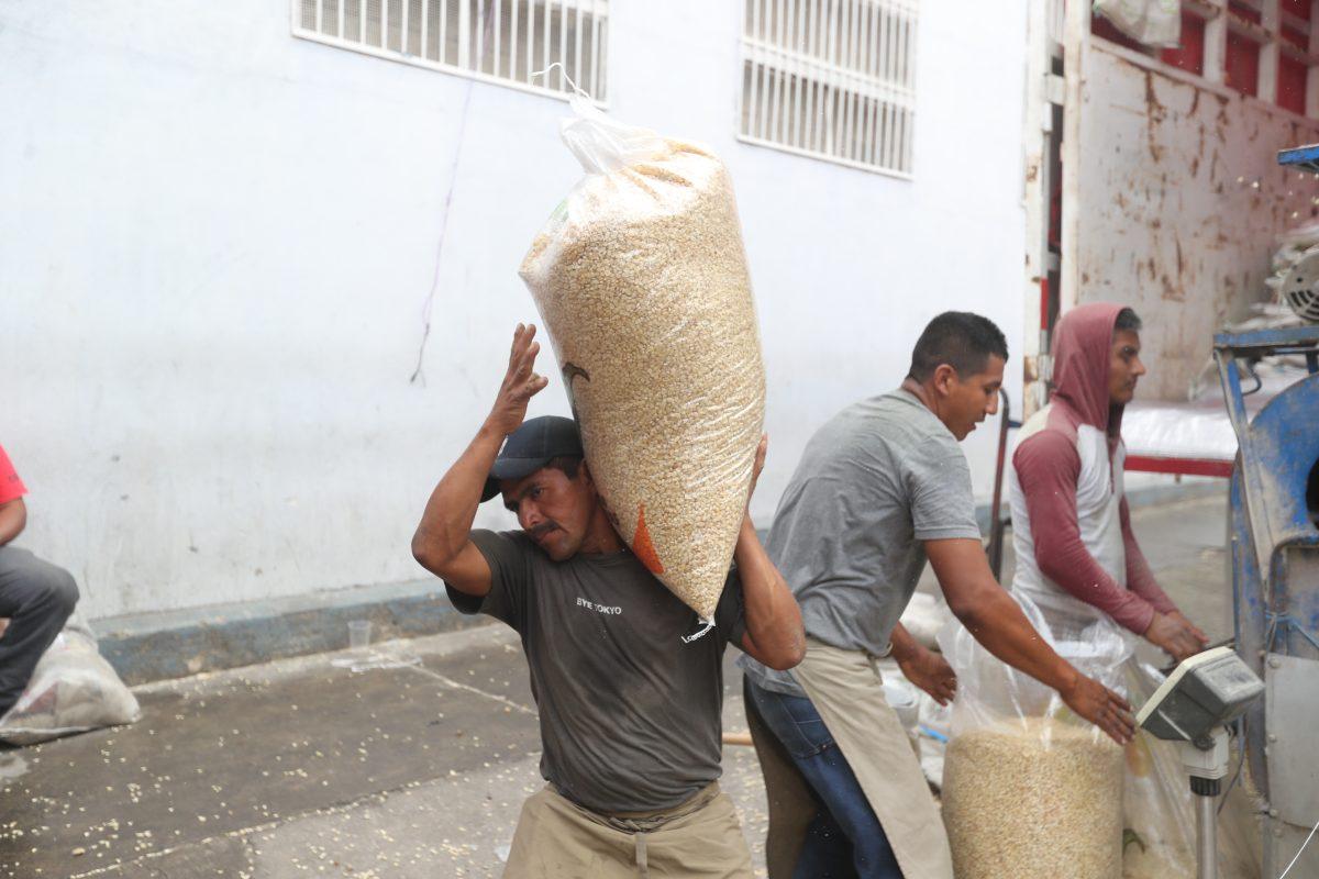 Maíz recupera terreno y la cosecha creció 8.4%