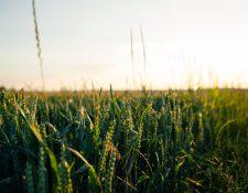 Una dieta llena de componentes energéticos son la base de una buena nutrición. (Foto Prensa Libre: Unsplash)