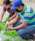 Pequeños productores de diferentes regiones del país recibieron pilones para sembrar huertos familiares con el objetivo de mejorar su calidad de vida. (Foto Prensa Libre: Agrequima)