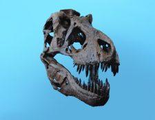 Este carnívoro de seis metros de altura que dominó la Tierra durante el Crectácico tardío, hace unos 75 millones de años.  (Foto Prensa Libre: Unplash)