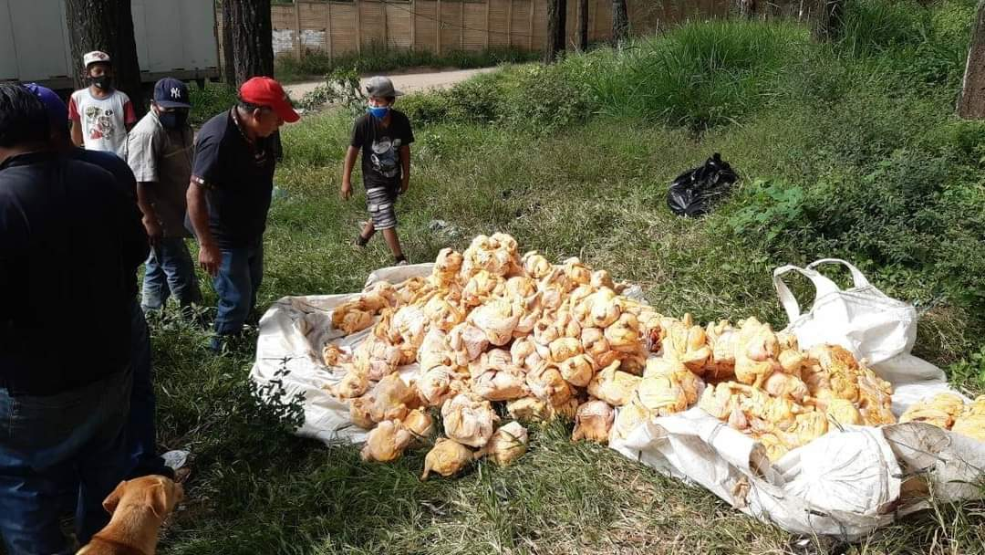 """""""Grave riesgo para la salud"""": investigan abandono de decenas de pollos descompuestos en ruta al Pacífico"""