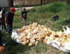 Pollos fueron dejados en terreno baldío. (Foto: PMT Villa Nueva)