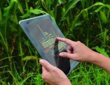 Los beneficios de la conectividad se reflejan en mejoras de buenas prácticas agrícolas, traslado de conocimientos, acceso a educación y salud. (Foto Prensa Libre: Shutterstock)