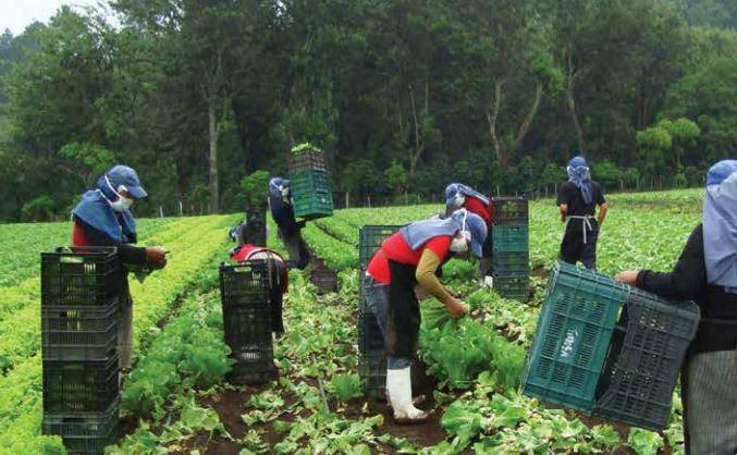 Los productos agrícolas frescos y agroindustriales aún tienen potencial para abarcar el mercado estadounidense. (Foto Prensa Libre: Camagro)