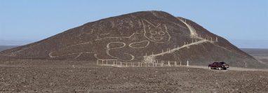Fotografía cedida por el Ministerio de Cultura de Perú, de la figura de un gato de unos 37 metros de largo reposando sobre una colina arenosa en la Pampa de Nazca. (Foto Prensa Libre: EFE)