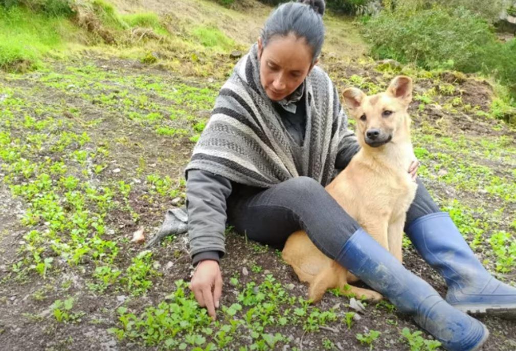 Envenenan a Luna, la perra de la familia campesina que es la sensación de YouTube en Colombia