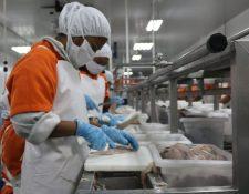 Durante la pandemia el sector acuícola de exportación salió a flote al adaptar nuevas estrategias. (Foto Prensa Libre: Agexport)