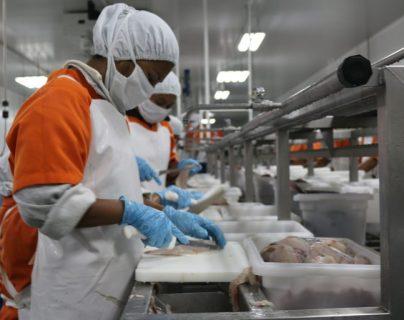 Coronavirus: cómo el camarón guatemalteco de exportación salió a flote de la pandemia