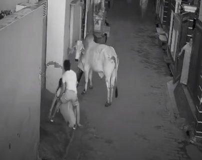 Captura de video que muestra el ataque de un toro a una anciana en India. (Foto Prensa Libre: Captura de video)
