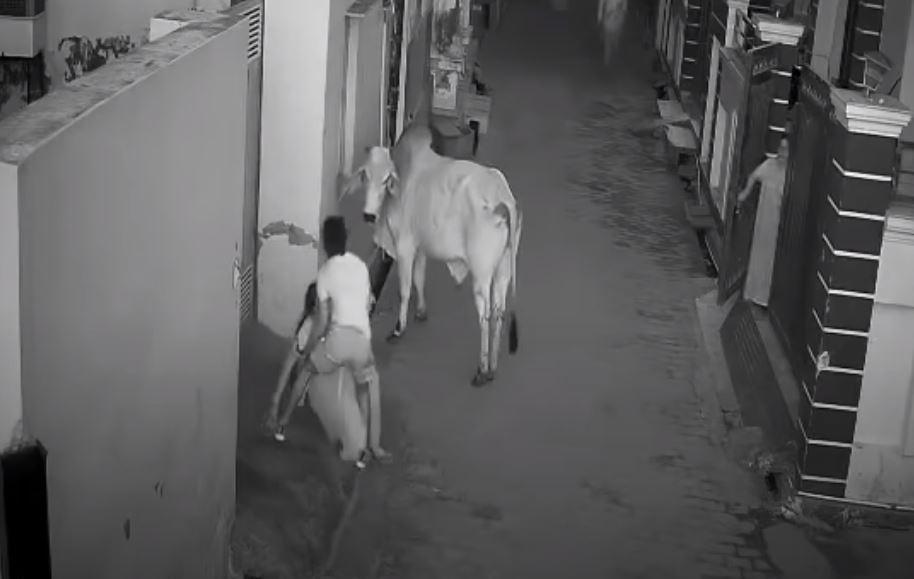 Todo un héroe: niño salva a su abuela de un ataque de un toro en India