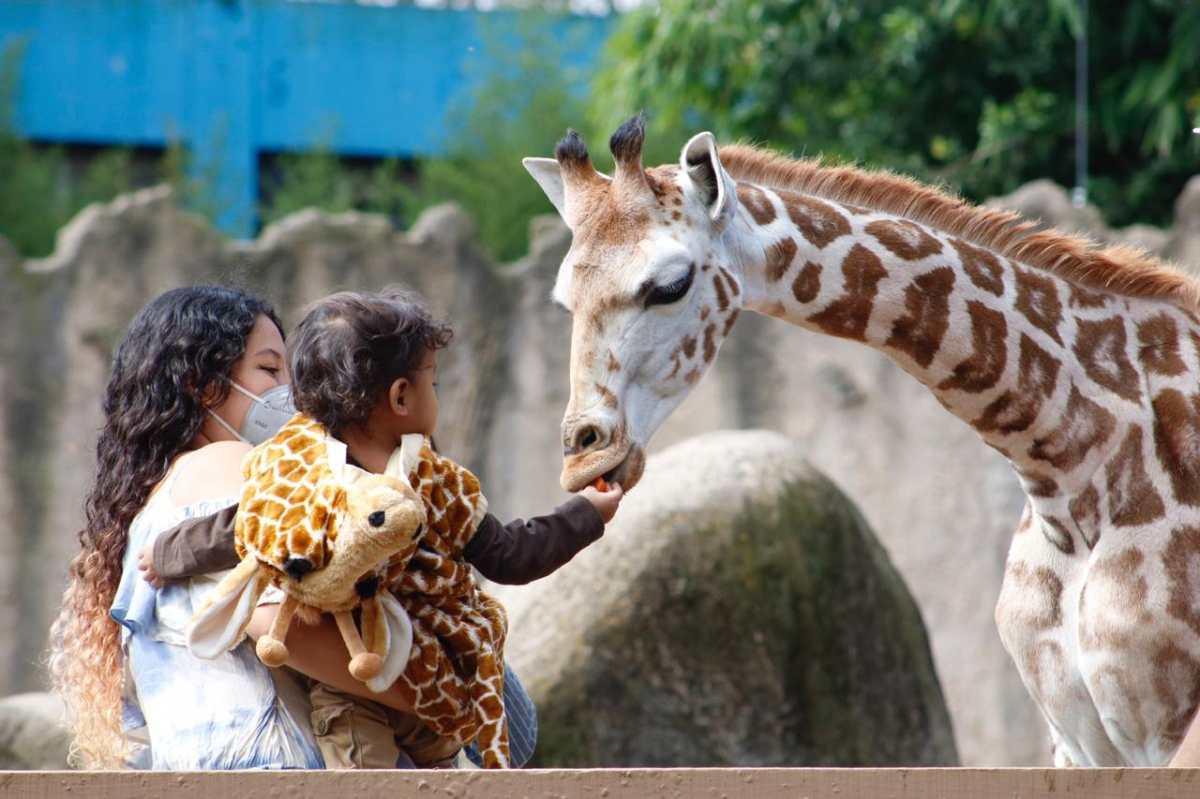 Halloween en Guatemala: Animales del zoológico La Aurora celebran con calabazas