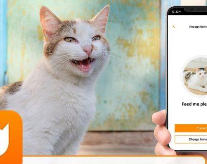 Akvelon busca que los dueños de gatos entiendan a sus felinos a través de sus maullidos.