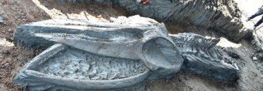 Los huesos todavía deberán ser sometidos a datación por carbono.