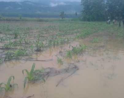 Más de 59 mil familias afectadas en sus cultivos por paso de tormenta tropical Eta en Guatemala