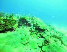 Los peligros de la vida marina