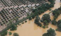 Vista aérea de las inundaciones en Morales, Izabal. (Foto Prensa Libre: Juan Diego González)