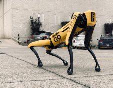 Los perros robots de KIO Networks alcanzan una velocidad de movimiento máxima de 5.7 km/h. (Foto Prensa Libre: Cortesía KIO Networks)