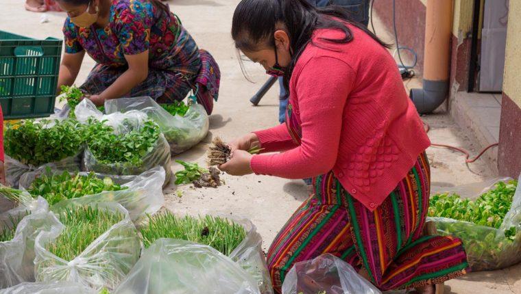 Las microfinancieras son un apoyo financiero para pequeños productores afectados por la pandemia. (Foto Prensa Libre: Cortesía Agrequima)