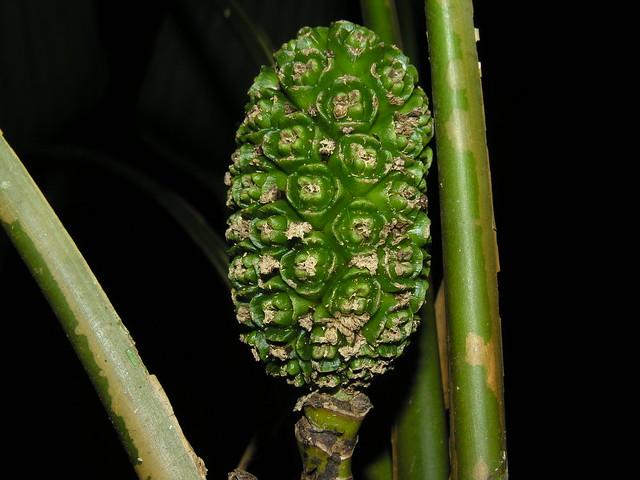 Frutas y hortalizas raras que crecen en Guatemala
