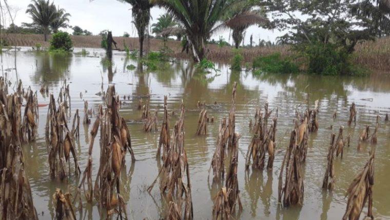 Variedad de cultivos quedaron anegados por los efectos de la tormenta Eta en Guatemala. (Foto Prensa Libre: Maga)
