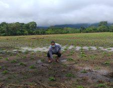 Variedad de cultivos quedaron anegados, principalmente en 108 municipios del país donde afectaron las dos tormentas. (Foto Prensa Libre: Cortesía Maga)