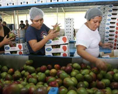 Trump vs. Biden: ¿Impactará el cambio de mando la economía y el intercambio en Guatemala?