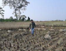 Los daños que dejaron las tormentas tropicales Eta e Iota en al agricultura son numerosos; los campesinos de infrasubsistencia necesitan ayuda.  (Foto  Maga)