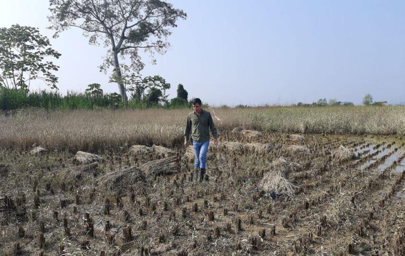 Programas de apoyo a campesinos tuvo un recorte de Q200 millones