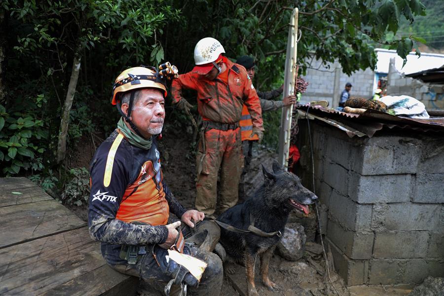 Dos perros auxilian en las tareas de búsqueda de víctimas de Eta en Guatemala