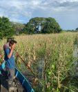 Algunos agricultores reclamaron seguros por pérdida de cultivos debido a efectos de Tormenta Eta en Guatemala. (Foto Prensa Libre: Maga)
