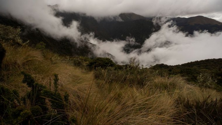 Expertos ecuatorianos encontraron osos de anteojos en una zona ganadera. Foto Prensa Libre.