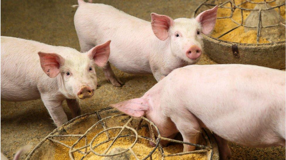Qué es Protón, la revolucionaria proteína artificial con la que se busca alimentar a animales en todo el mundo