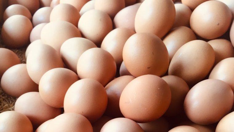 Son pura proteína.