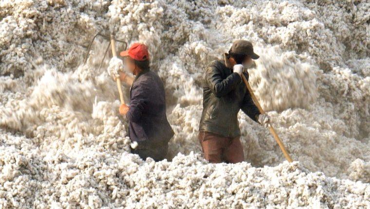 Más de un millón de trabajadores realizan duros trabajos de recolección de algodón en Xinjiang bajo condiciones cuestionables.