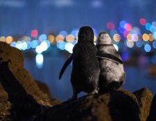 La foto fue tomada por el fotógrafo alemán Tobias Baumgaertner.