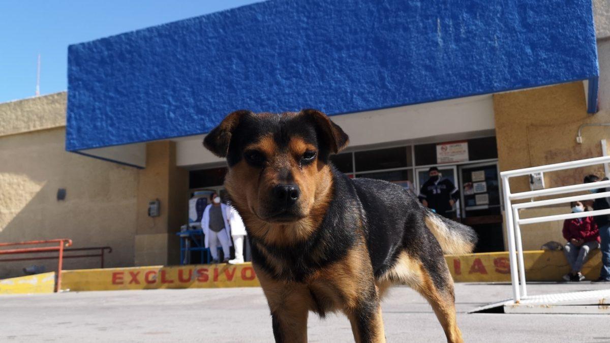 Covito: la historia del perro que lleva un mes esperando a su dueño que murió por coronavirus