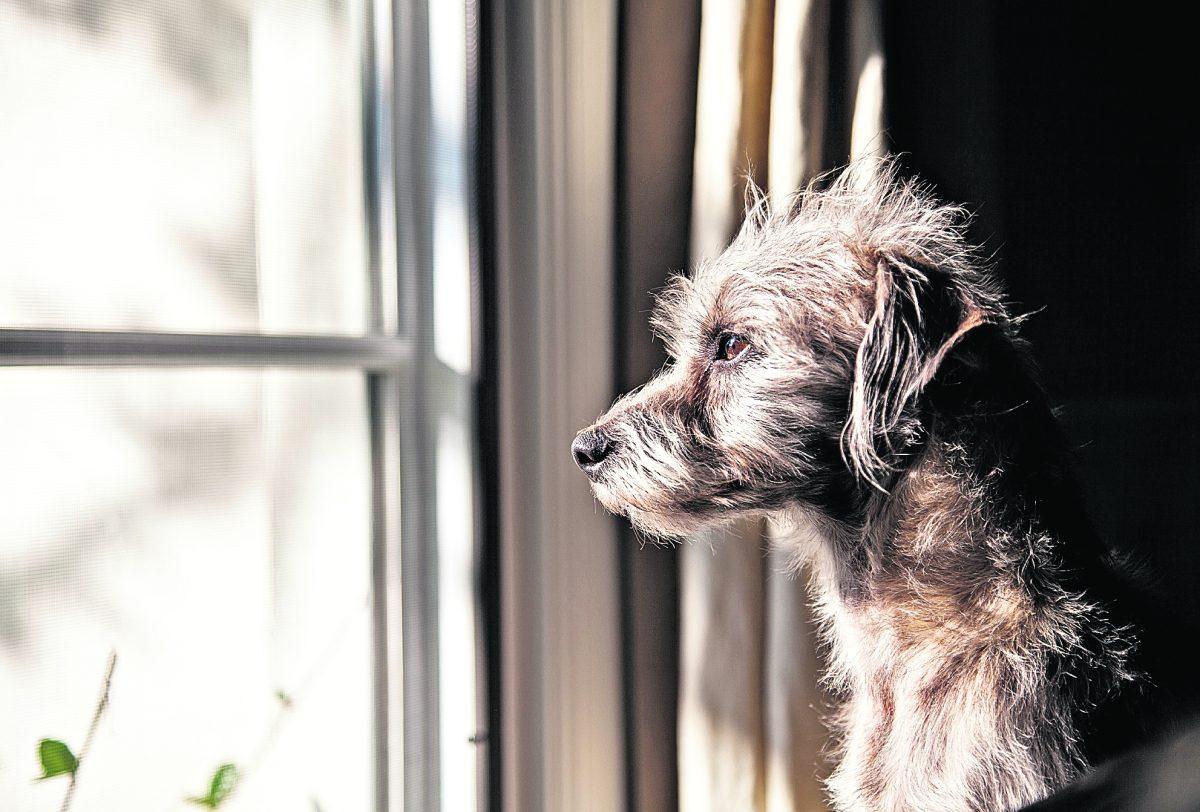 Perros y gatos se angustian si se quedan solos en casa durante muchos días