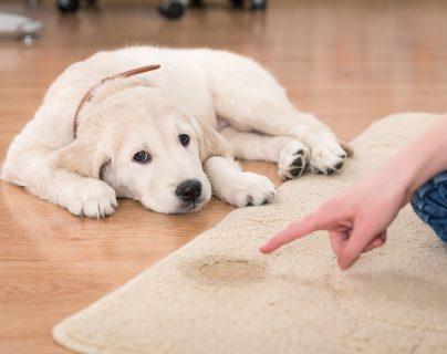 Aprende con Noé: Enseña a tu cachorro a evacuar en un mismo sitio
