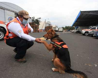 """""""Dragón"""", el perro que estuvo a punto de morir en un incendio forestal y que ahora podría salvar vidas"""