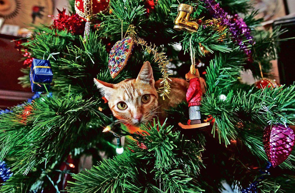 Cuidados de la mascota en Navidad