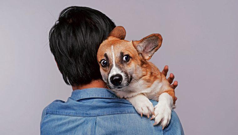 Los perros suelen enloquecer al escuchar el ruido que hace la pirotecnia.