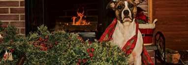 Durante estas fechas es muy común que los perros boten los árboles de Navidad.