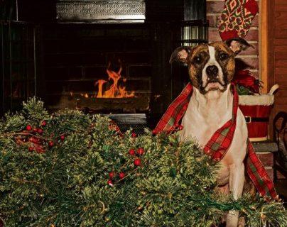 10 consejos para evitar que tu perro destroce la casa