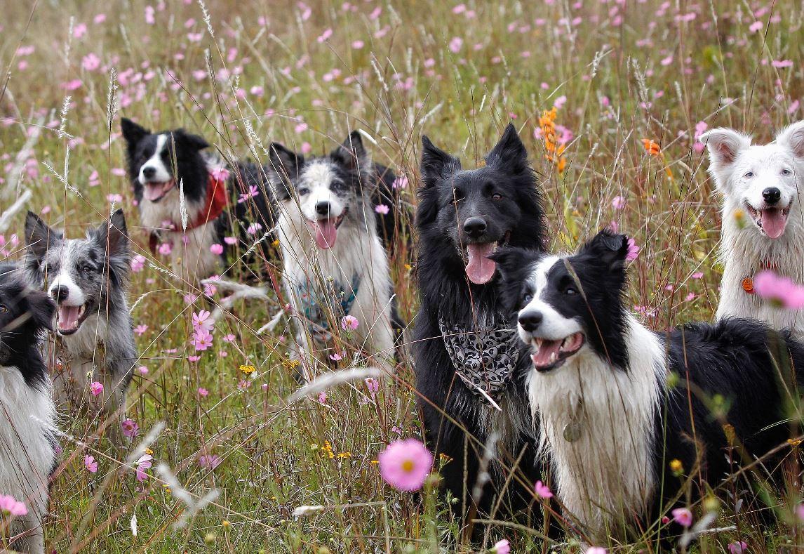 Cinco perros han dado positivo a covid-19 en los últimos meses en México