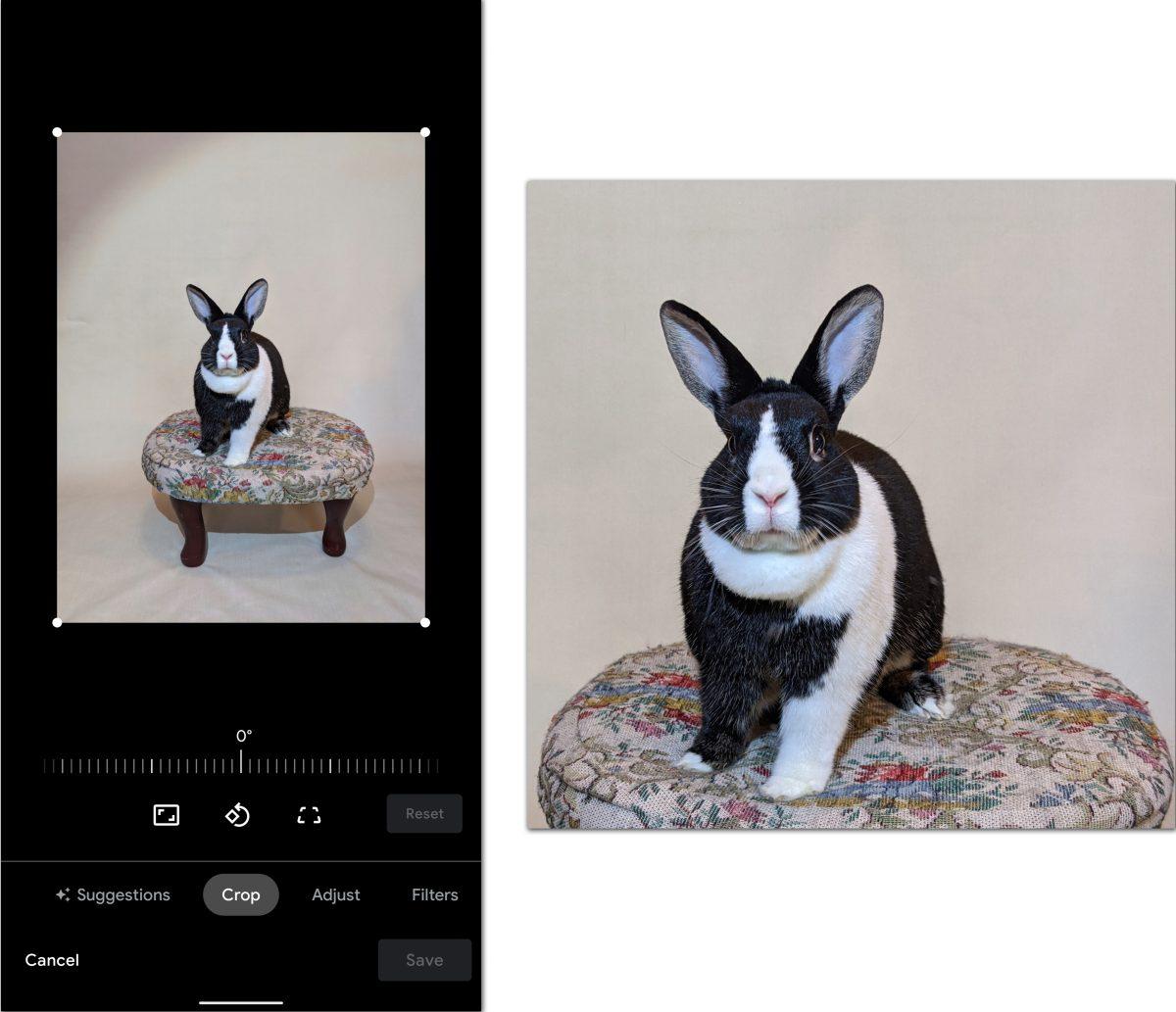 Cómo tomar retratos de mascotas
