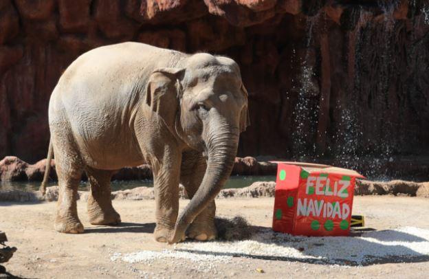 Trompita junto a su regalo navideño. (Foto Prensa Libre: Juan Diego González)